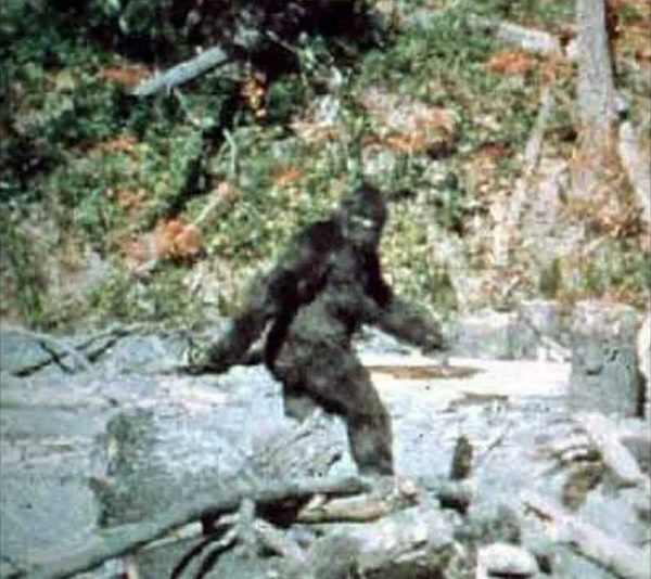Real Bigfoot Sightings
