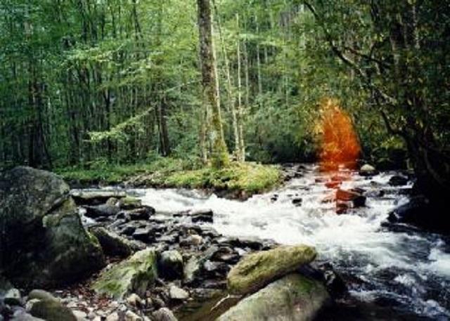 Fantôme rouge dans la forêt